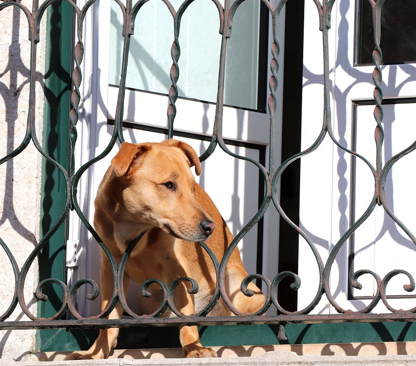 Hund ved havelåge